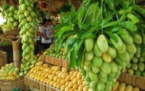ilo guimaras mangoes to sk