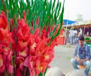 Gudimalkapur Flower Market Hyderabad 1 1024x679