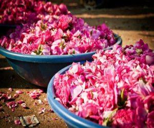 flower market hyderabad